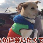 「動物愛護残酷物語」 人気犬・もか吉は泣いている